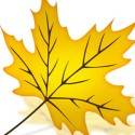 Beautiful Autumn Yellow Leaf