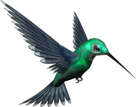 Realistic Green Humming Bird PNG