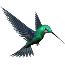 Green Humming Bird