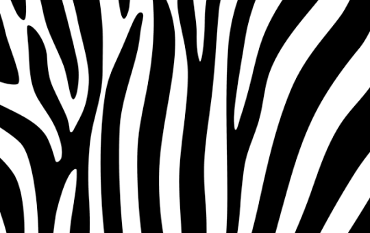 Zebra Stripe Background Pattern