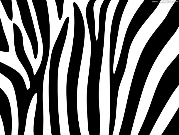 Aninimal Book: Zebra Stripe Background Pattern