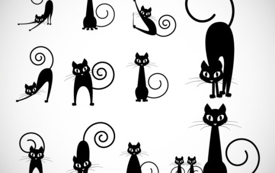 Black Cat Vector Illustrations